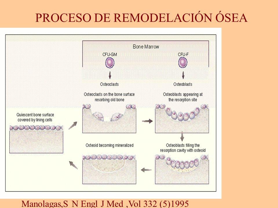 Manolagas,S N Engl J Med,Vol 332 (5)1995 PROCESO DE REMODELACIÓN ÓSEA