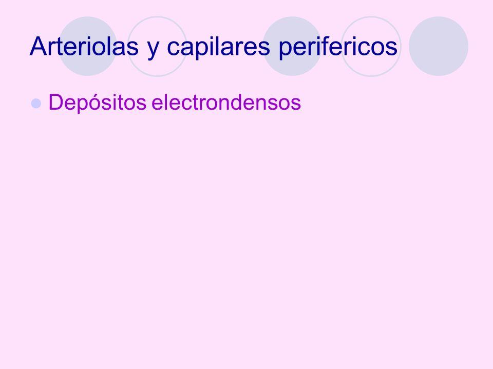 Arteriolas y capilares perifericos Depósitos electrondensos