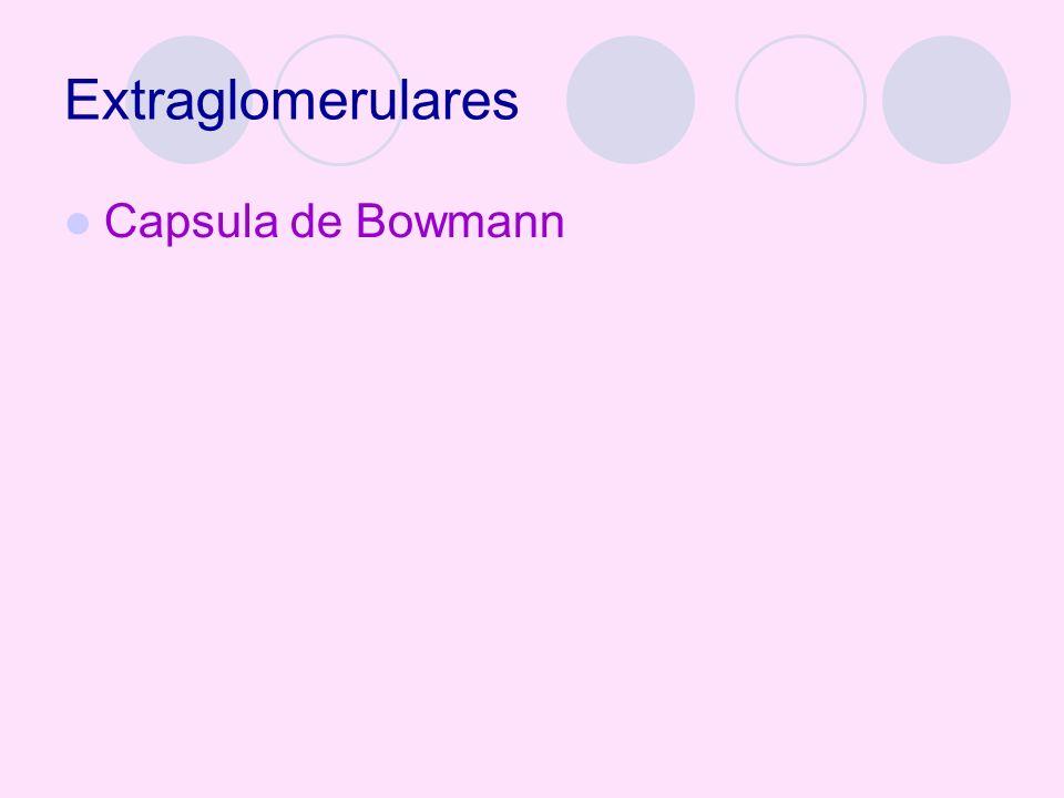 Extraglomerulares Capsula de Bowmann