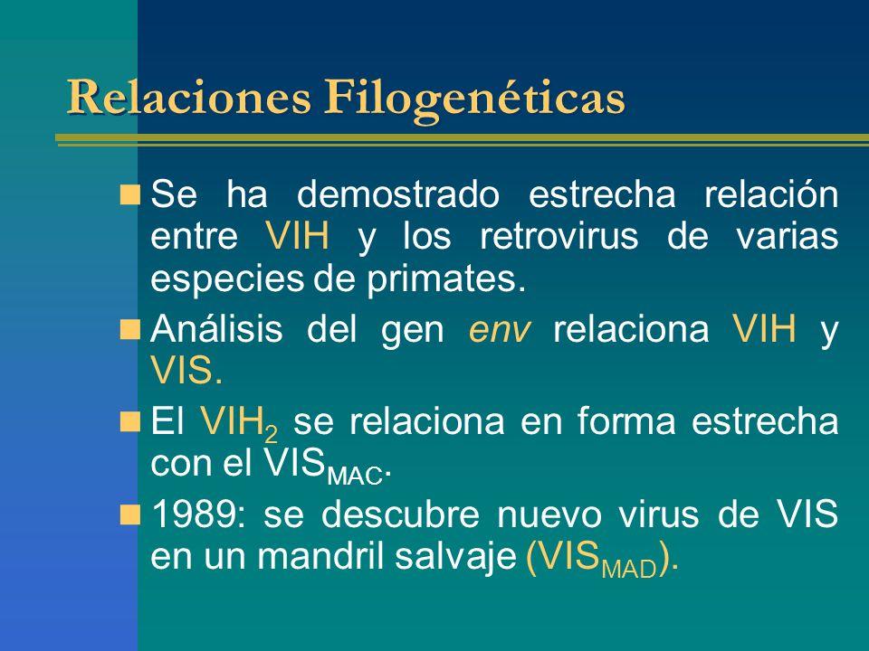 Relaciones Filogenéticas Se ha demostrado estrecha relación entre VIH y los retrovirus de varias especies de primates. Análisis del gen env relaciona