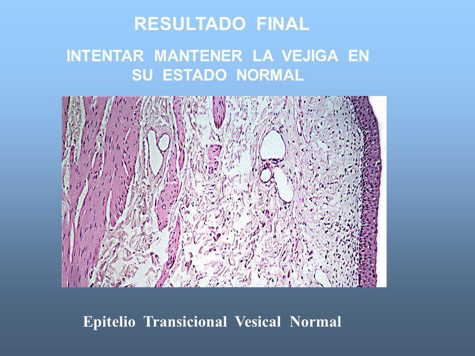 RESULTADO FINAL INTENTAR MANTENER LA VEJIGA EN SU ESTADO NORMAL Epitelio Transicional Vesical Normal