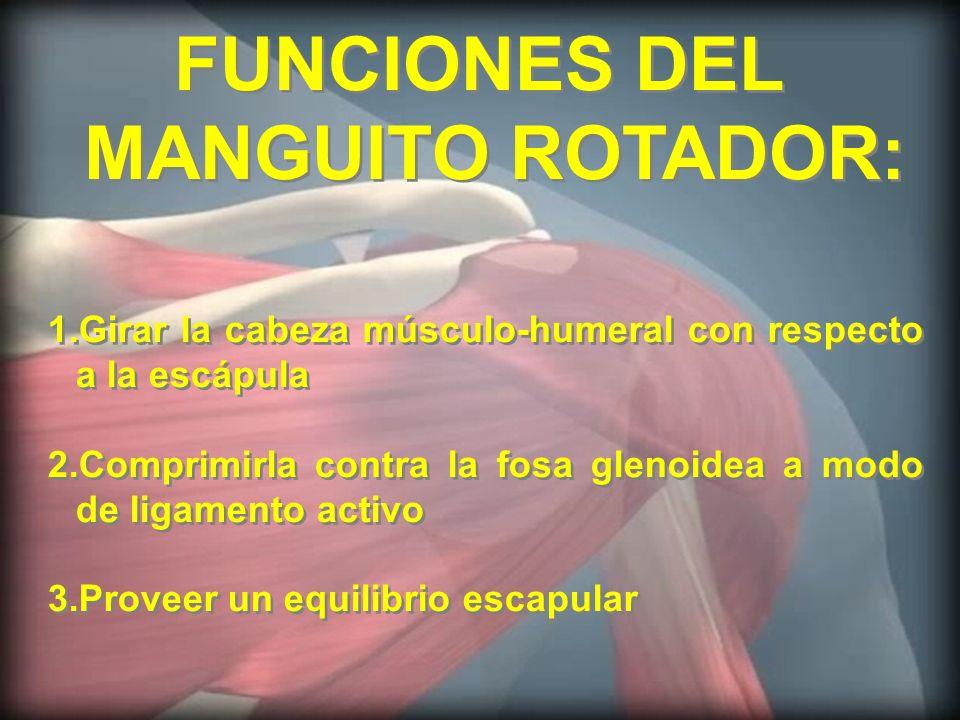 FUNCIONES DEL MANGUITO ROTADOR: FUNCIONES DEL MANGUITO ROTADOR: 1.Girar la cabeza músculo-humeral con respecto a la escápula 2.Comprimirla contra la f