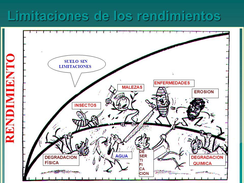 Limitaciones de los rendimientos AGUA MALEZAS ENFERMEDADES INSECTOS DEGRADACION QUIMICA DEGRADACION FÍSICA EROSION DE SER TI FI CA CION SUELO SIN LIMITACIONES RENDIMIENTO