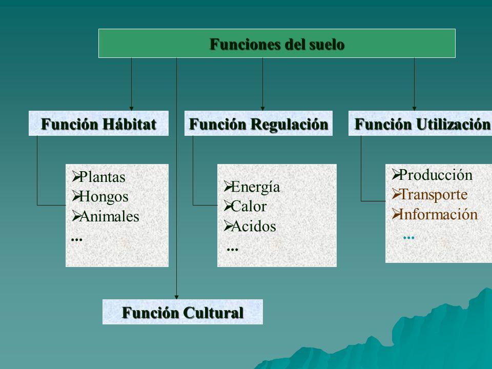 Funciones del suelo Función Hábitat Función Regulación Función Utilización Plantas Hongos Animales...