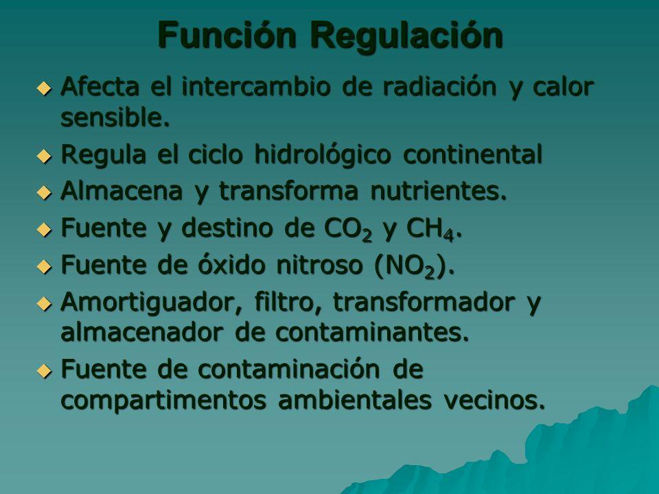 Función Regulación Afecta el intercambio de radiación y calor sensible.