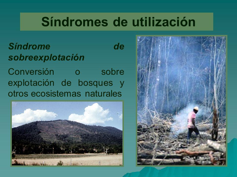 Síndromes de utilización Síndrome de sobreexplotación Conversión o sobre explotación de bosques y otros ecosistemas naturales
