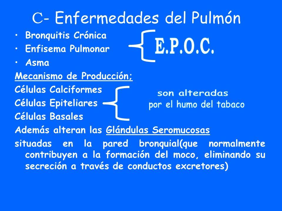 C - Enfermedades del Pulmón Bronquitis Crónica Enfisema Pulmonar Asma Mecanismo de Producción; Células Calciformes Células Epiteliares Células Basales