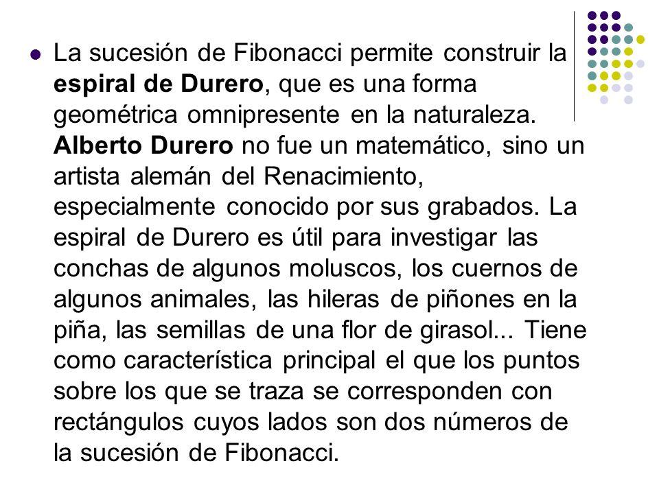 La sucesión de Fibonacci permite construir la espiral de Durero, que es una forma geométrica omnipresente en la naturaleza. Alberto Durero no fue un m