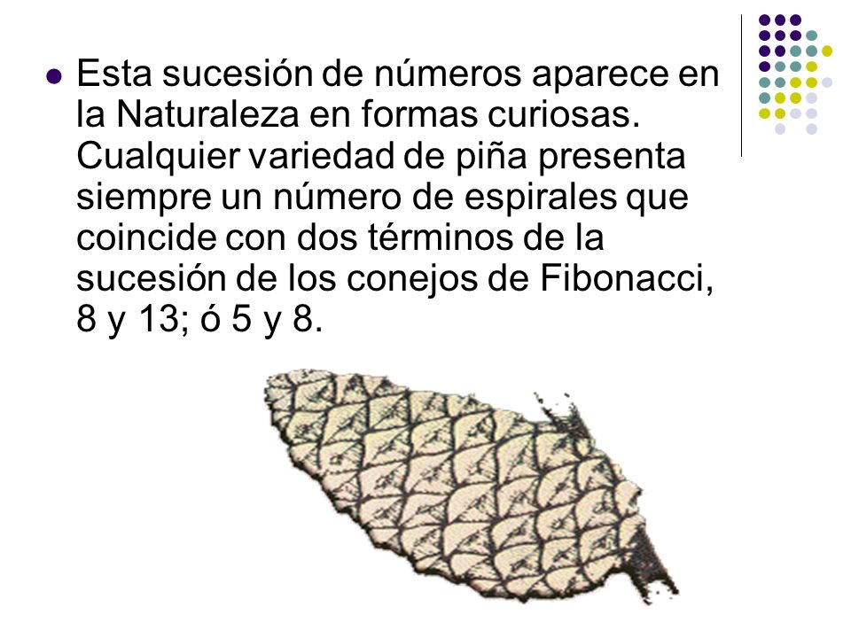 Esta sucesión de números aparece en la Naturaleza en formas curiosas. Cualquier variedad de piña presenta siempre un número de espirales que coincide