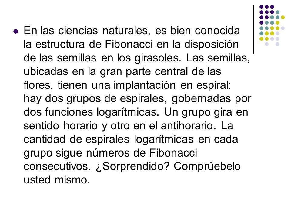 En las ciencias naturales, es bien conocida la estructura de Fibonacci en la disposición de las semillas en los girasoles. Las semillas, ubicadas en l