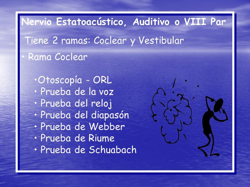 Nervio Estatoacústico, Auditivo o VIII Par Tiene 2 ramas: Coclear y Vestibular Rama Coclear Otoscopía - ORL Prueba de la voz Prueba del reloj Prueba d