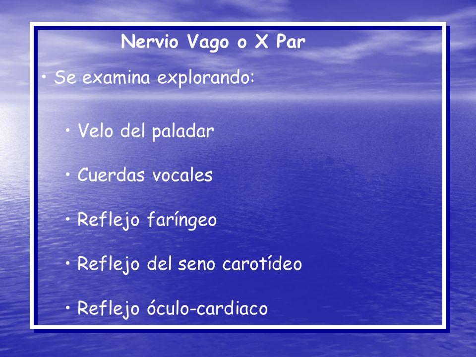 Nervio Vago o X Par Se examina explorando: Velo del paladar Cuerdas vocales Reflejo faríngeo Reflejo del seno carotídeo Reflejo óculo-cardiaco