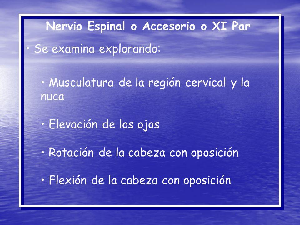 Nervio Espinal o Accesorio o XI Par Se examina explorando: Musculatura de la región cervical y la nuca Elevación de los ojos Rotación de la cabeza con