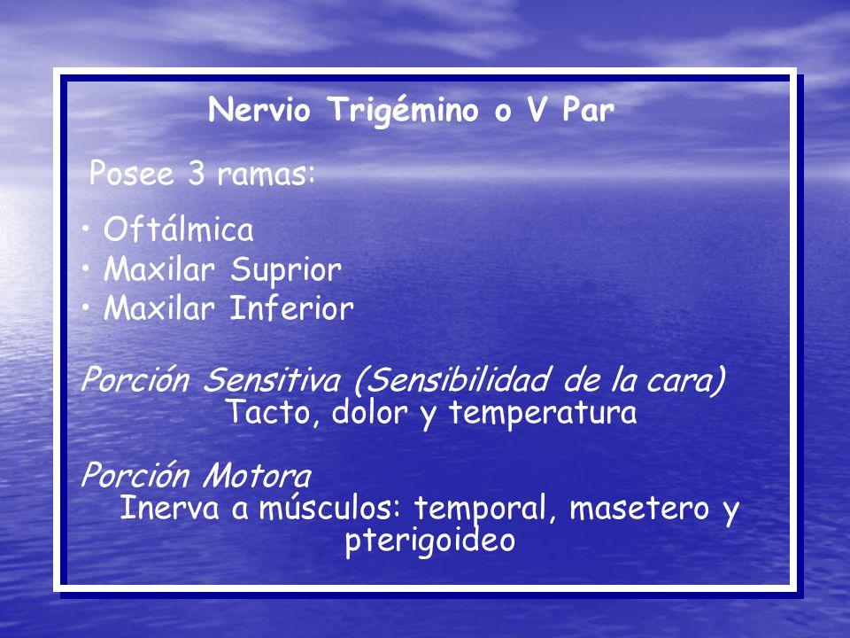 Nervio Trigémino o V Par Posee 3 ramas: Oftálmica Maxilar Suprior Maxilar Inferior Porción Sensitiva (Sensibilidad de la cara) Tacto, dolor y temperat