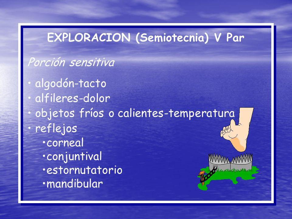 EXPLORACION (Semiotecnia) V Par Porción sensitiva algodón-tacto alfileres-dolor objetos fríos o calientes-temperatura reflejos corneal conjuntival est