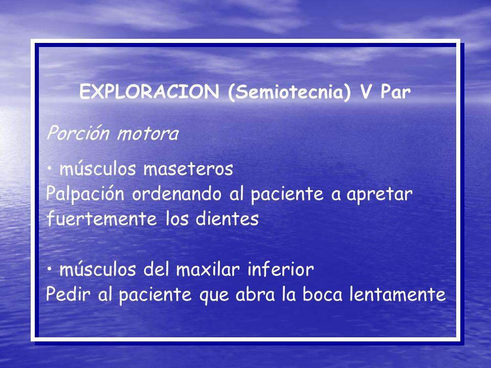 EXPLORACION (Semiotecnia) V Par Porción motora músculos maseteros Palpación ordenando al paciente a apretar fuertemente los dientes músculos del maxil