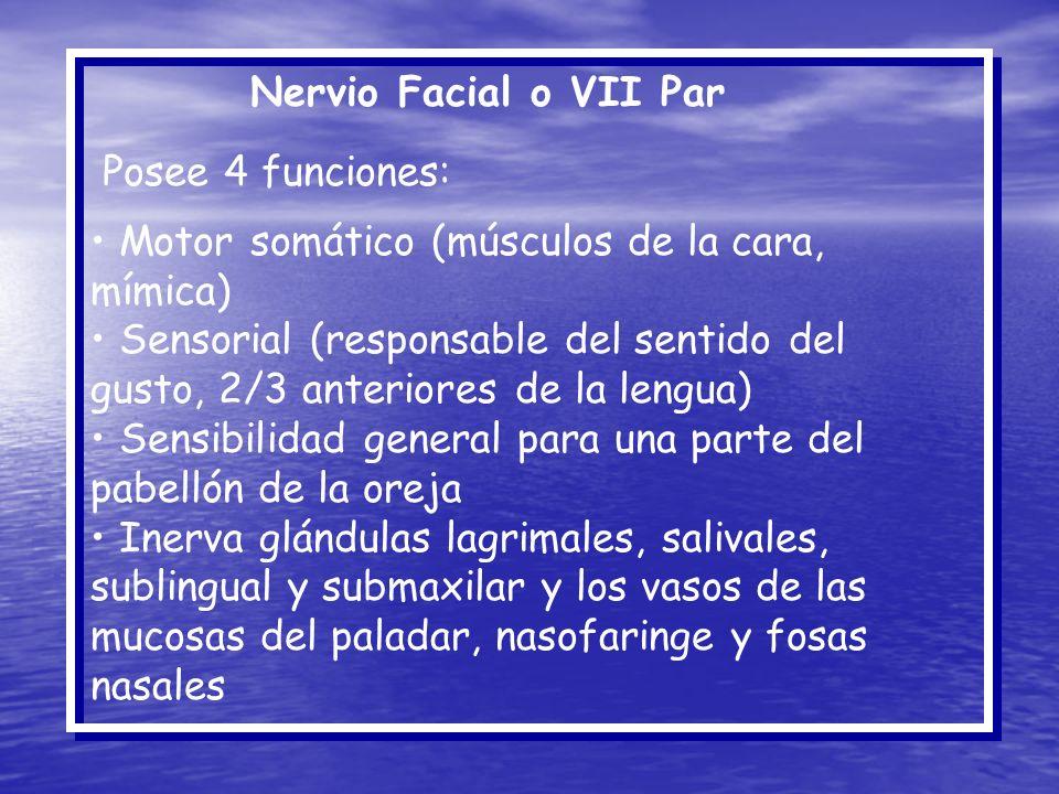 Nervio Facial o VII Par Posee 4 funciones: Motor somático (músculos de la cara, mímica) Sensorial (responsable del sentido del gusto, 2/3 anteriores d