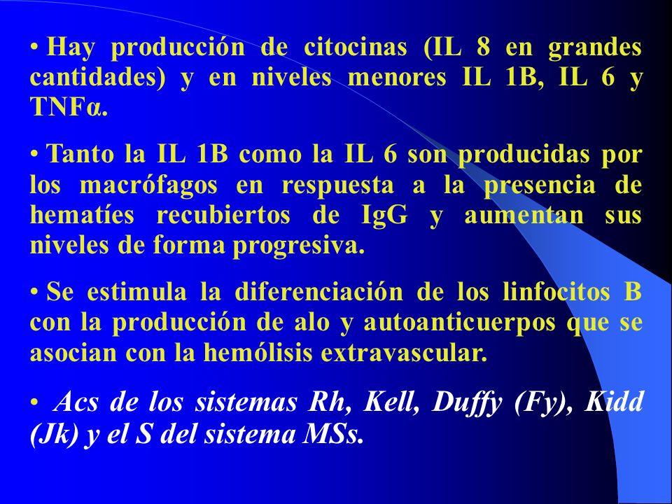 Hay producción de citocinas (IL 8 en grandes cantidades) y en niveles menores IL 1B, IL 6 y TNFα. Tanto la IL 1B como la IL 6 son producidas por los m