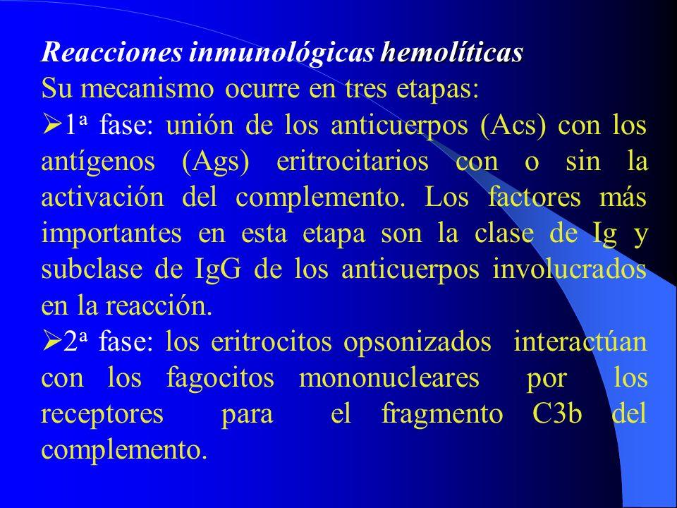 hemolíticas Reacciones inmunológicas hemolíticas Su mecanismo ocurre en tres etapas: 1 a fase: unión de los anticuerpos (Acs) con los antígenos (Ags)