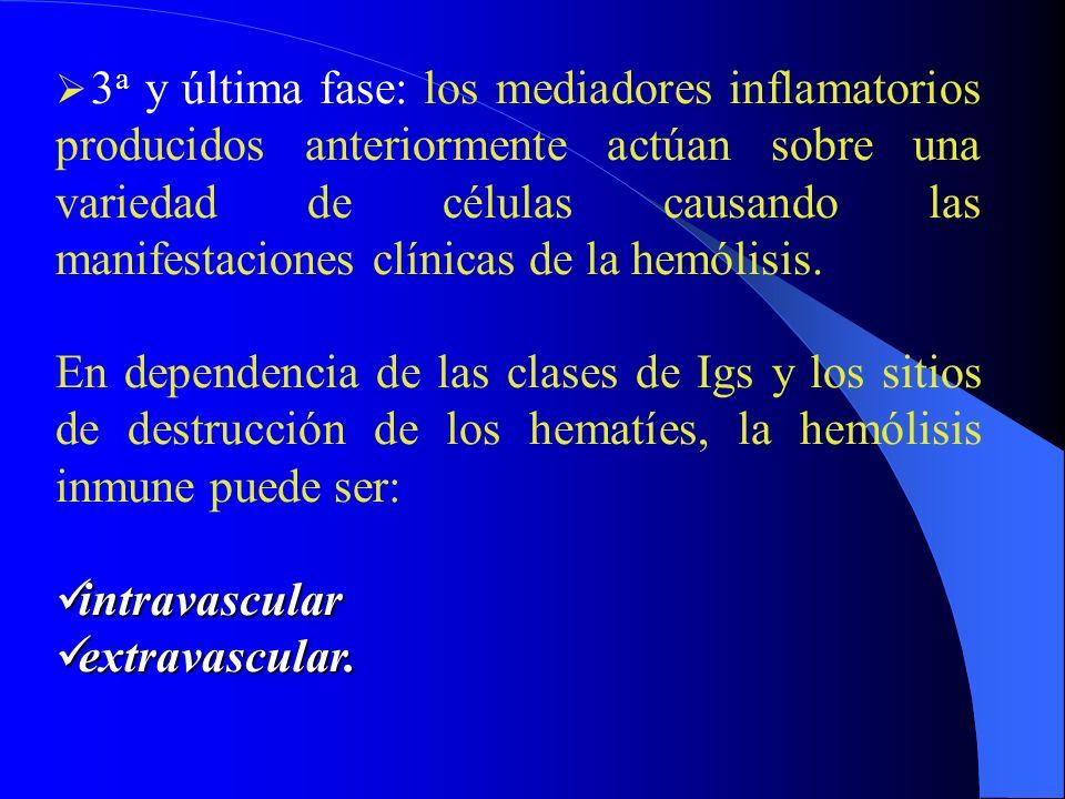 3 a y última fase: los mediadores inflamatorios producidos anteriormente actúan sobre una variedad de células causando las manifestaciones clínicas de