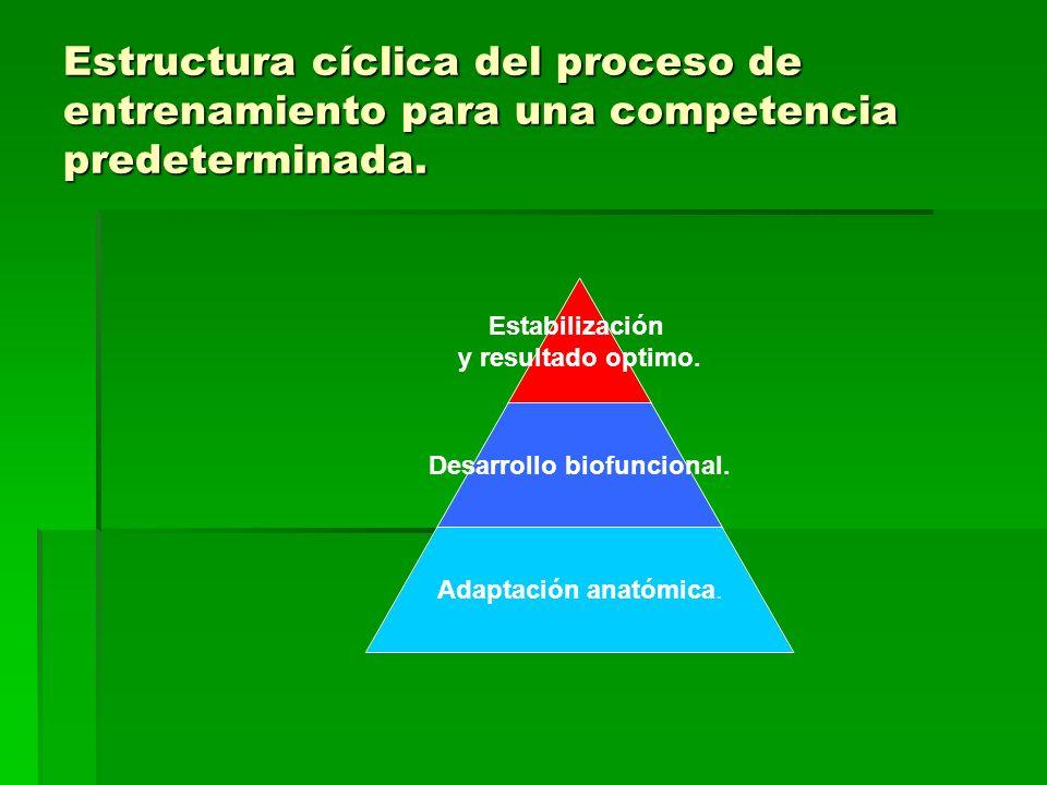 Estructura cíclica del proceso de entrenamiento para una competencia predeterminada. Estabilización y resultado optimo. Desarrollo biofuncional. Adapt