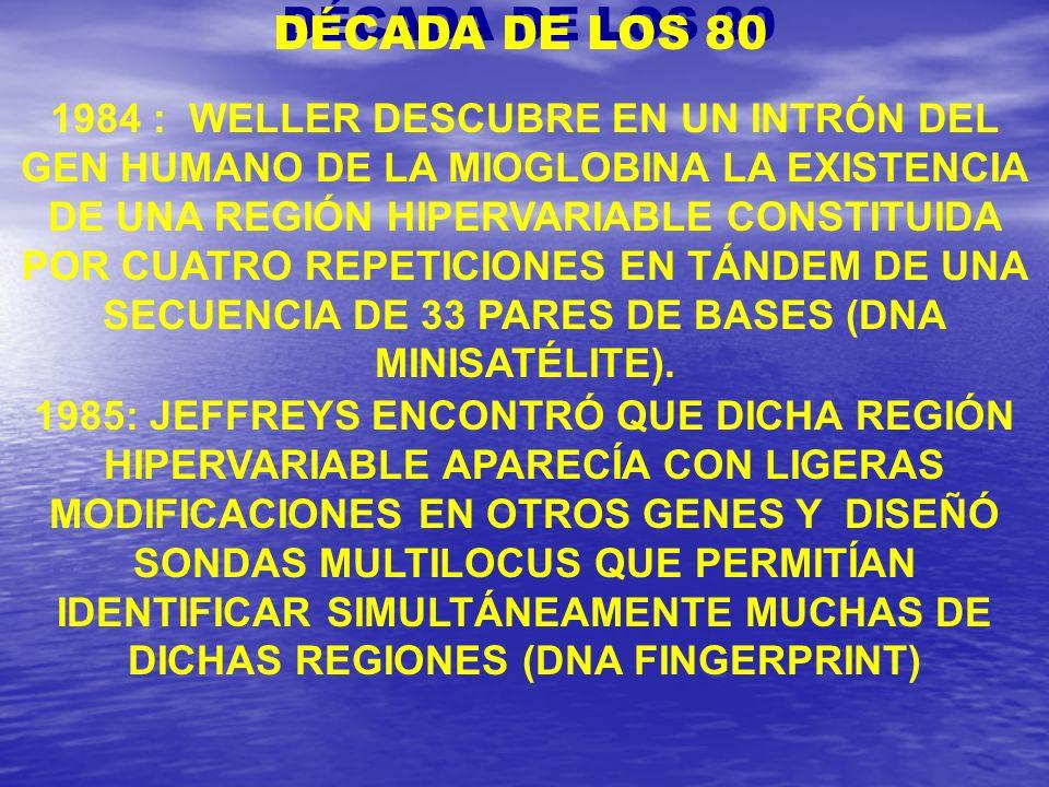 1984 : WELLER DESCUBRE EN UN INTRÓN DEL GEN HUMANO DE LA MIOGLOBINA LA EXISTENCIA DE UNA REGIÓN HIPERVARIABLE CONSTITUIDA POR CUATRO REPETICIONES EN T