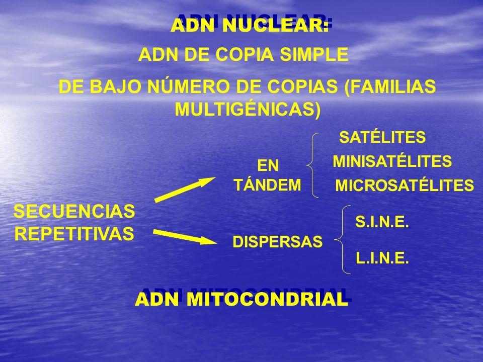 ADN DE COPIA SIMPLE DE BAJO NÚMERO DE COPIAS (FAMILIAS MULTIGÉNICAS) SECUENCIAS REPETITIVAS EN TÁNDEM SATÉLITES MINISATÉLITES MICROSATÉLITES DISPERSAS