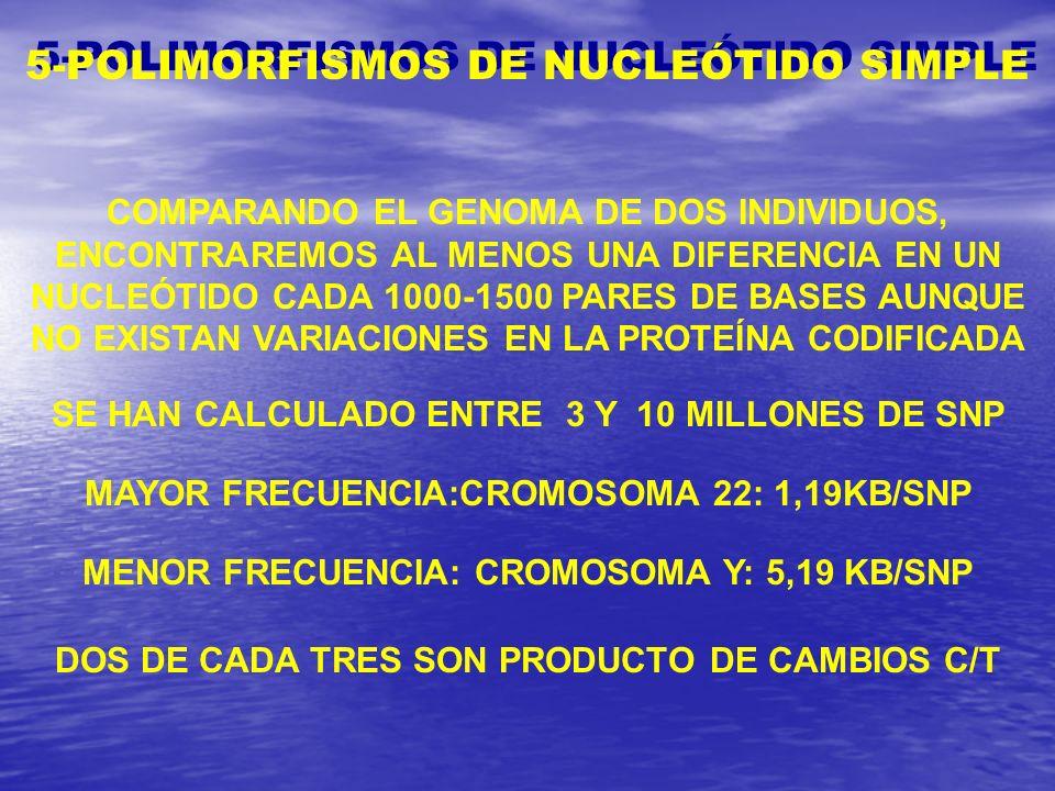 5-POLIMORFISMOS DE NUCLEÓTIDO SIMPLE COMPARANDO EL GENOMA DE DOS INDIVIDUOS, ENCONTRAREMOS AL MENOS UNA DIFERENCIA EN UN NUCLEÓTIDO CADA 1000-1500 PAR