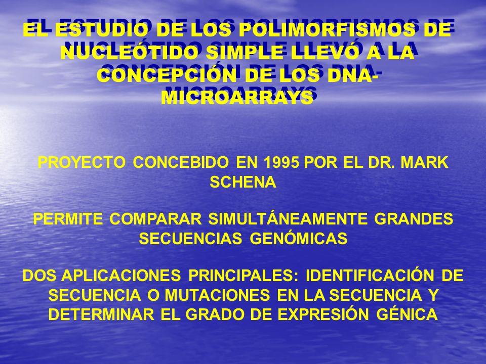 EL ESTUDIO DE LOS POLIMORFISMOS DE NUCLEÓTIDO SIMPLE LLEVÓ A LA CONCEPCIÓN DE LOS DNA- MICROARRAYS PROYECTO CONCEBIDO EN 1995 POR EL DR. MARK SCHENA P