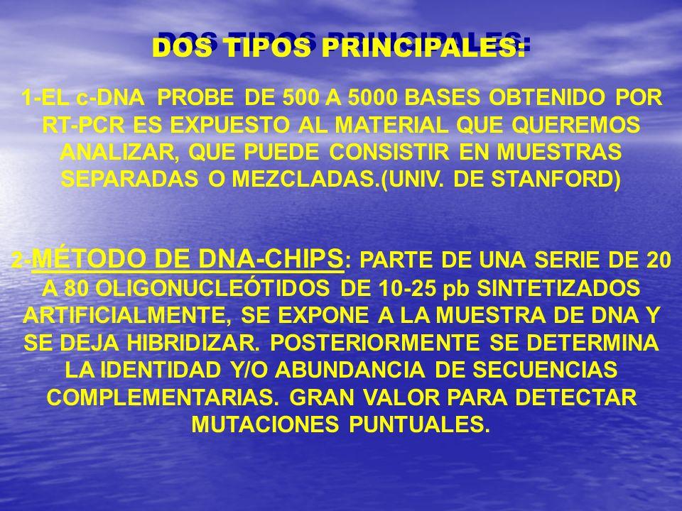 DOS TIPOS PRINCIPALES: 1-EL c-DNA PROBE DE 500 A 5000 BASES OBTENIDO POR RT-PCR ES EXPUESTO AL MATERIAL QUE QUEREMOS ANALIZAR, QUE PUEDE CONSISTIR EN