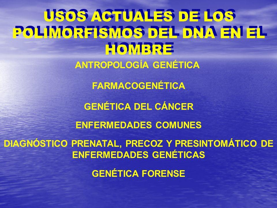 USOS ACTUALES DE LOS POLIMORFISMOS DEL DNA EN EL HOMBRE ANTROPOLOGÍA GENÉTICA FARMACOGENÉTICA GENÉTICA DEL CÁNCER DIAGNÓSTICO PRENATAL, PRECOZ Y PRESI