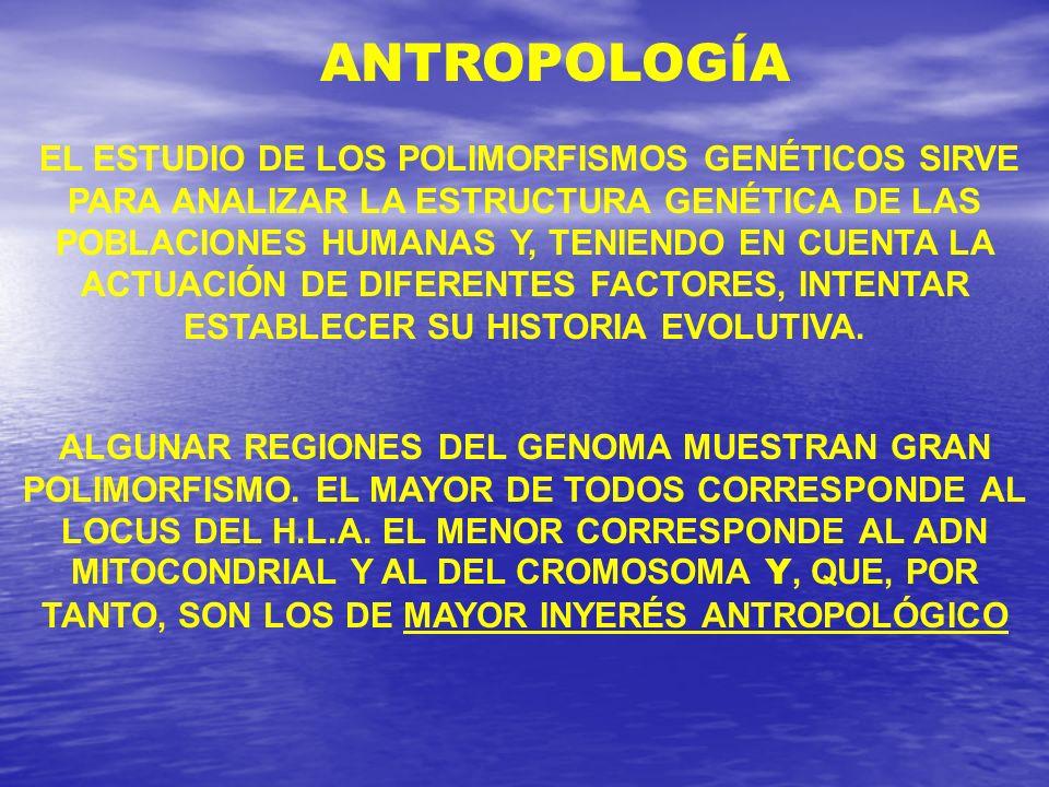 EL ESTUDIO DE LOS POLIMORFISMOS GENÉTICOS SIRVE PARA ANALIZAR LA ESTRUCTURA GENÉTICA DE LAS POBLACIONES HUMANAS Y, TENIENDO EN CUENTA LA ACTUACIÓN DE