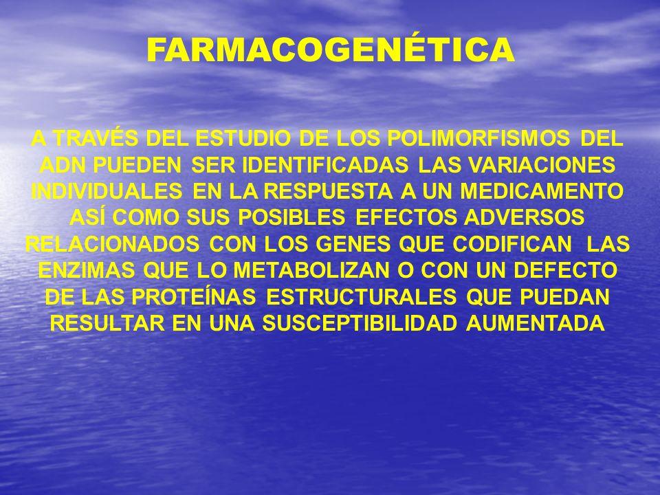 A TRAVÉS DEL ESTUDIO DE LOS POLIMORFISMOS DEL ADN PUEDEN SER IDENTIFICADAS LAS VARIACIONES INDIVIDUALES EN LA RESPUESTA A UN MEDICAMENTO ASÍ COMO SUS