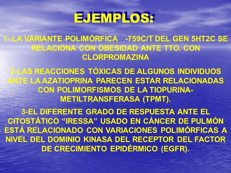 1- LA VARIANTE POLIMÓRFICA -759C/T DEL GEN 5HT2C SE RELACIONA CON OBESIDAD ANTE TTO. CON CLORPROMAZINA 2-LAS REACCIONES TÓXICAS DE ALGUNOS INDIVIDUOS