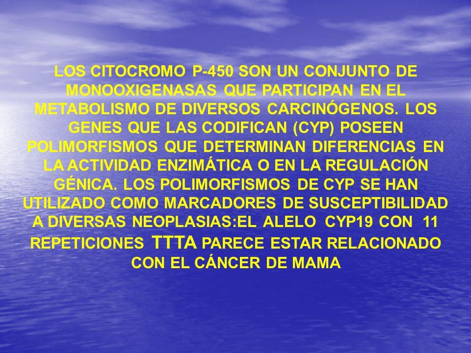 LOS CITOCROMO P-450 SON UN CONJUNTO DE MONOOXIGENASAS QUE PARTICIPAN EN EL METABOLISMO DE DIVERSOS CARCINÓGENOS. LOS GENES QUE LAS CODIFICAN (CYP) POS
