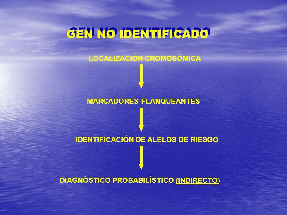 GEN NO IDENTIFICADO LOCALIZACIÓN CROMOSÓMICA MARCADORES FLANQUEANTES IDENTIFICACIÓN DE ALELOS DE RIESGO DIAGNÓSTICO PROBABILÍSTICO (INDIRECTO)