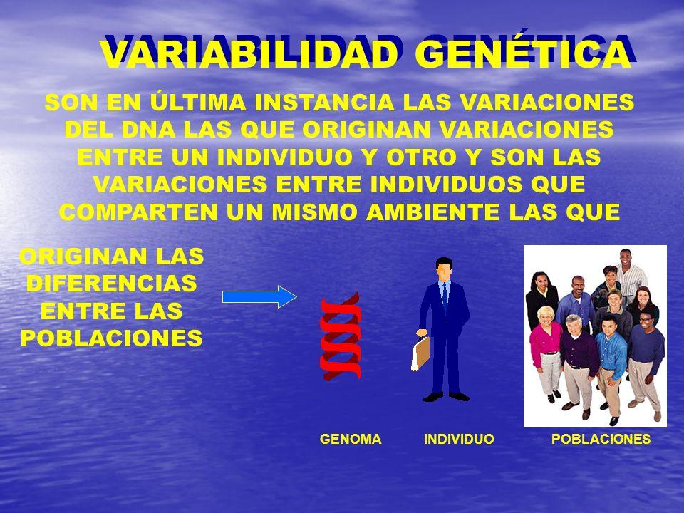 VARIABILIDAD GENÉTICA GENOMAINDIVIDUOPOBLACIONES SON EN ÚLTIMA INSTANCIA LAS VARIACIONES DEL DNA LAS QUE ORIGINAN VARIACIONES ENTRE UN INDIVIDUO Y OTR