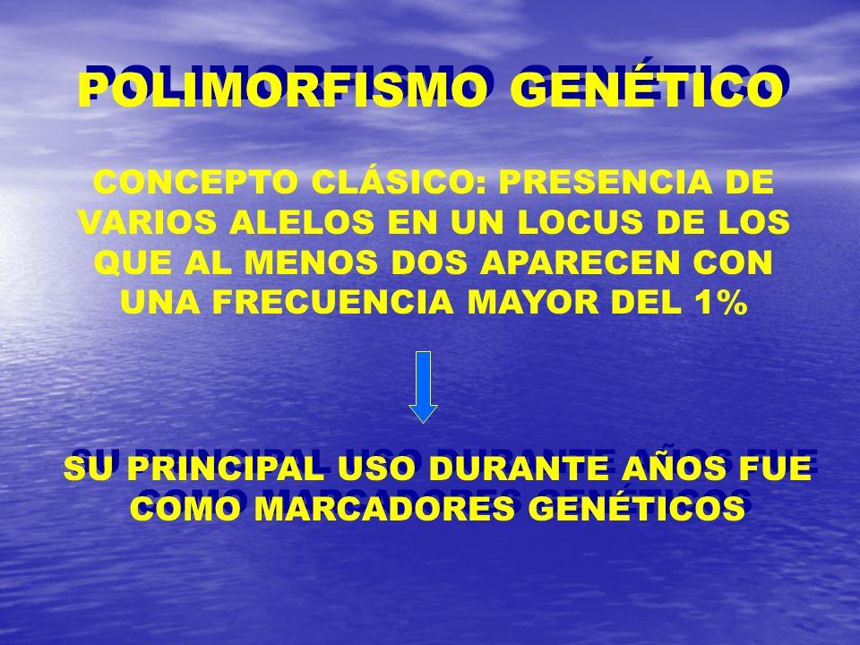 POLIMORFISMO GENÉTICO CONCEPTO CLÁSICO: PRESENCIA DE VARIOS ALELOS EN UN LOCUS DE LOS QUE AL MENOS DOS APARECEN CON UNA FRECUENCIA MAYOR DEL 1% SU PRI