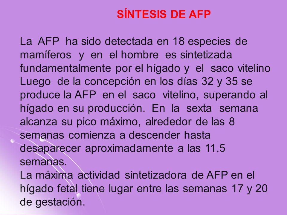 SÍNTESIS DE AFP La AFP ha sido detectada en 18 especies de mamíferos y en el hombre es sintetizada fundamentalmente por el hígado y el saco vitelino L