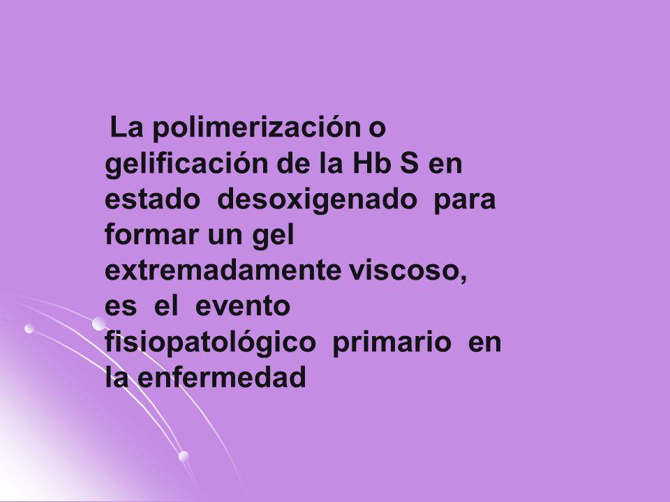 La polimerización o gelificación de la Hb S en estado desoxigenado para formar un gel extremadamente viscoso, es el evento fisiopatológico primario en