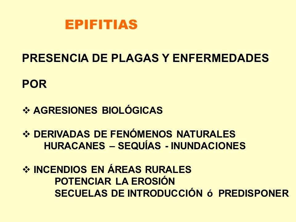 EPIFITIAS PRESENCIA DE PLAGAS Y ENFERMEDADES POR AGRESIONES BIOLÓGICAS DERIVADAS DE FENÓMENOS NATURALES HURACANES – SEQUÍAS - INUNDACIONES INCENDIOS E