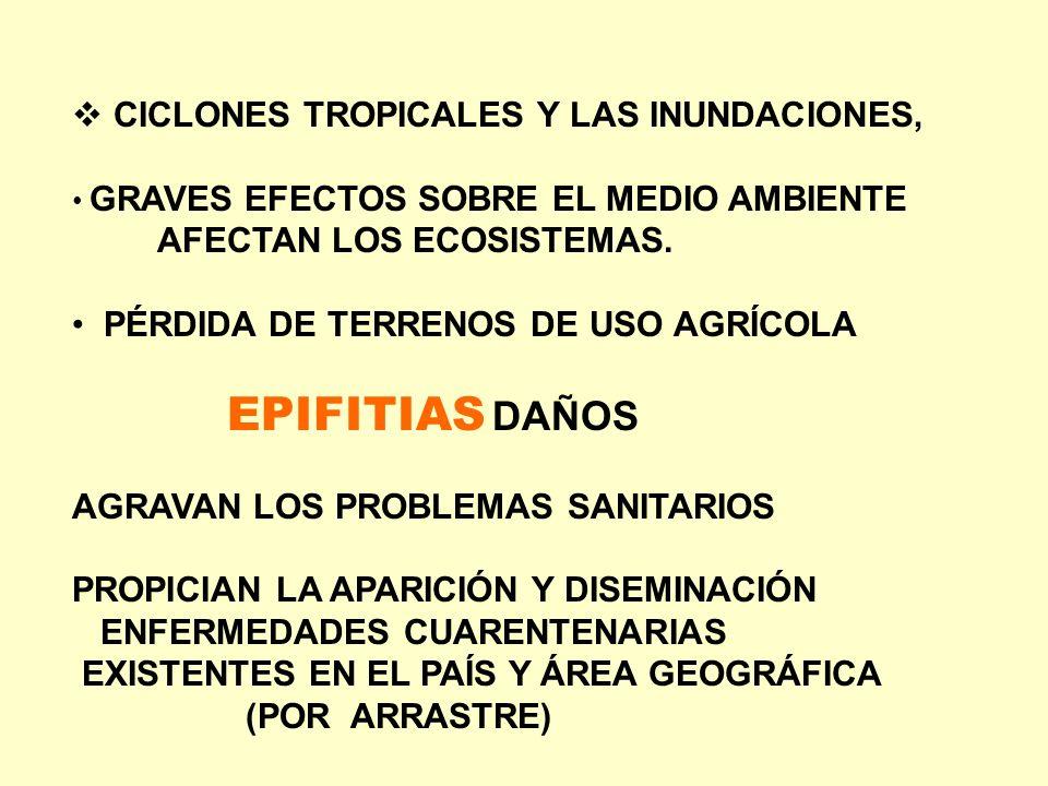 CICLONES TROPICALES Y LAS INUNDACIONES, GRAVES EFECTOS SOBRE EL MEDIO AMBIENTE AFECTAN LOS ECOSISTEMAS. PÉRDIDA DE TERRENOS DE USO AGRÍCOLA EPIFITIAS