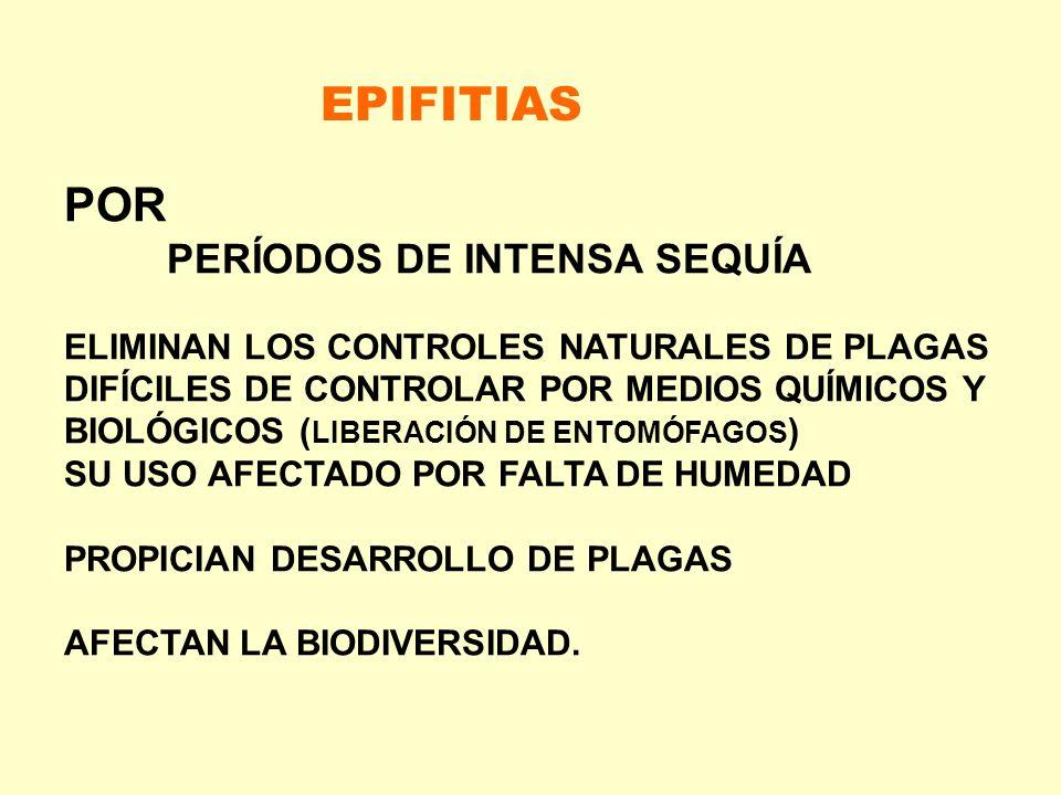 POR PERÍODOS DE INTENSA SEQUÍA ELIMINAN LOS CONTROLES NATURALES DE PLAGAS DIFÍCILES DE CONTROLAR POR MEDIOS QUÍMICOS Y BIOLÓGICOS ( LIBERACIÓN DE ENTO