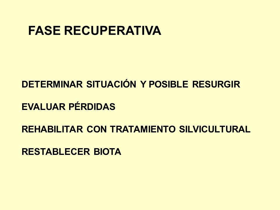 DETERMINAR SITUACIÓN Y POSIBLE RESURGIR EVALUAR PÉRDIDAS REHABILITAR CON TRATAMIENTO SILVICULTURAL RESTABLECER BIOTA FASE RECUPERATIVA