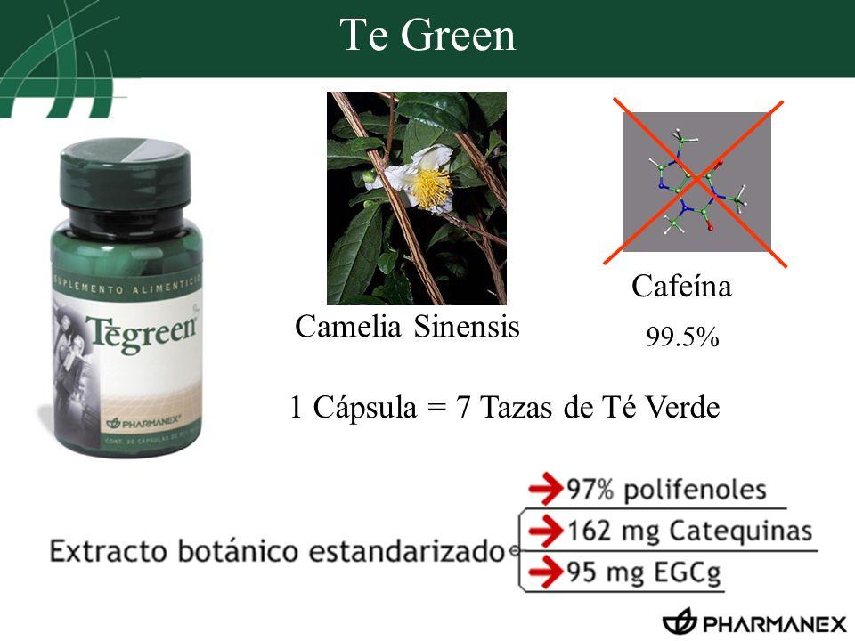 Te Green Cafeína 1 Cápsula = 7 Tazas de Té Verde Camelia Sinensis 99.5%