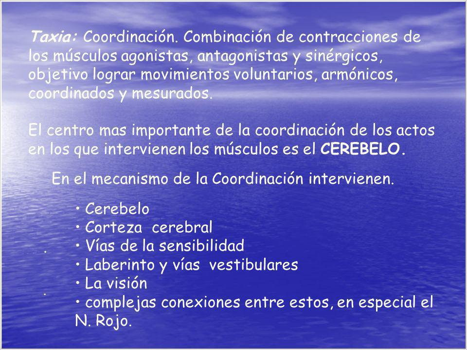 .... Taxia: Coordinación. Combinación de contracciones de los músculos agonistas, antagonistas y sinérgicos, objetivo lograr movimientos voluntarios,