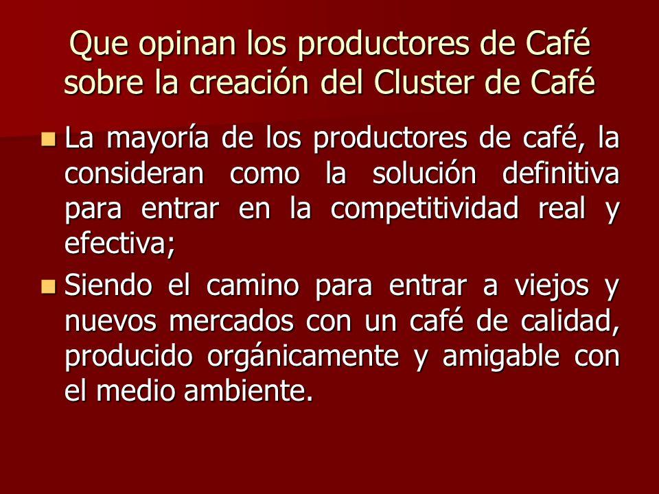 Que opinan los productores de Café sobre la creación del Cluster de Café La mayoría de los productores de café, la consideran como la solución definit