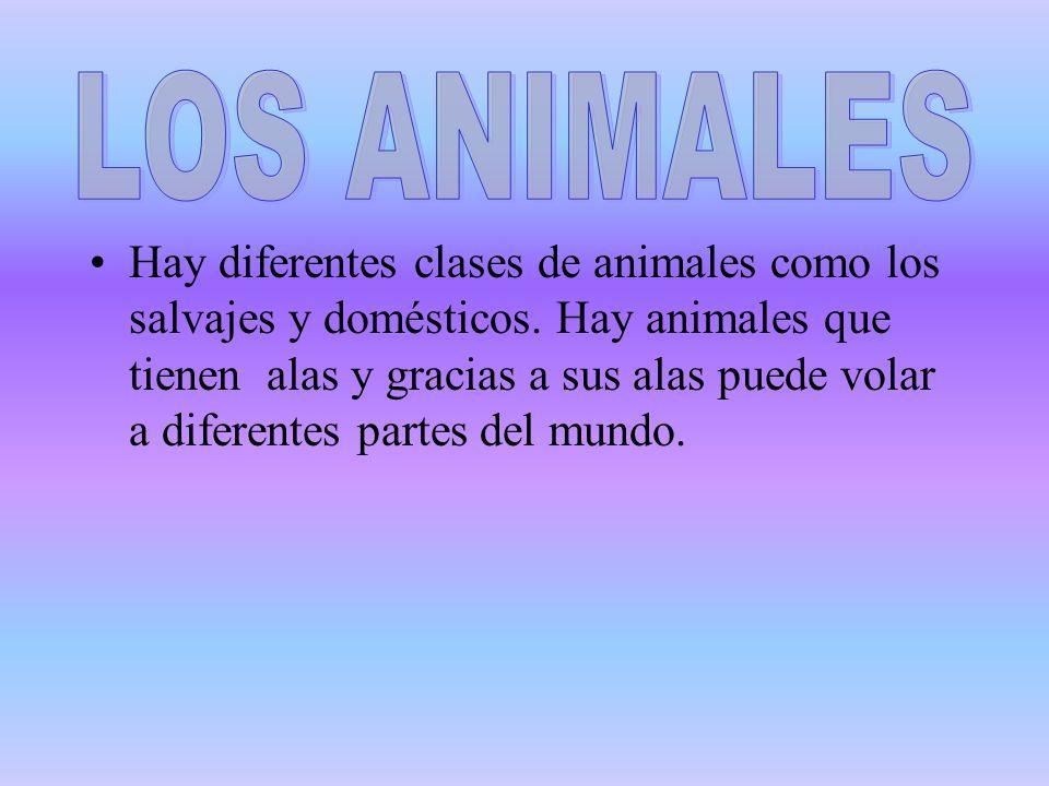 Los animales salvajes son los animales que comen carne, los animales salvajes como los leones, los tigres, etc.