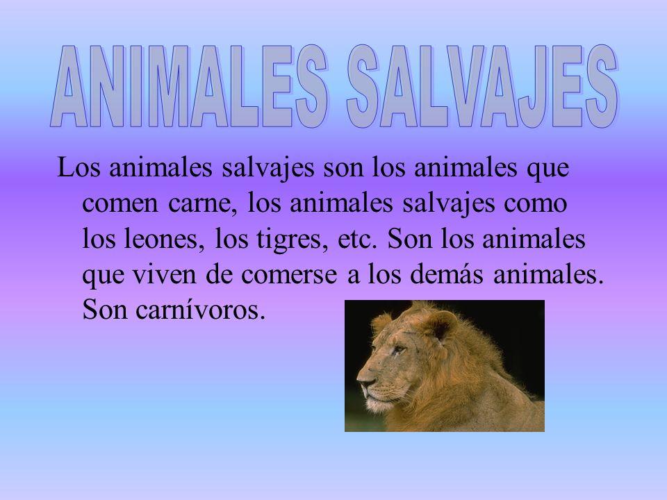 Los animales salvajes son los animales que comen carne, los animales salvajes como los leones, los tigres, etc. Son los animales que viven de comerse