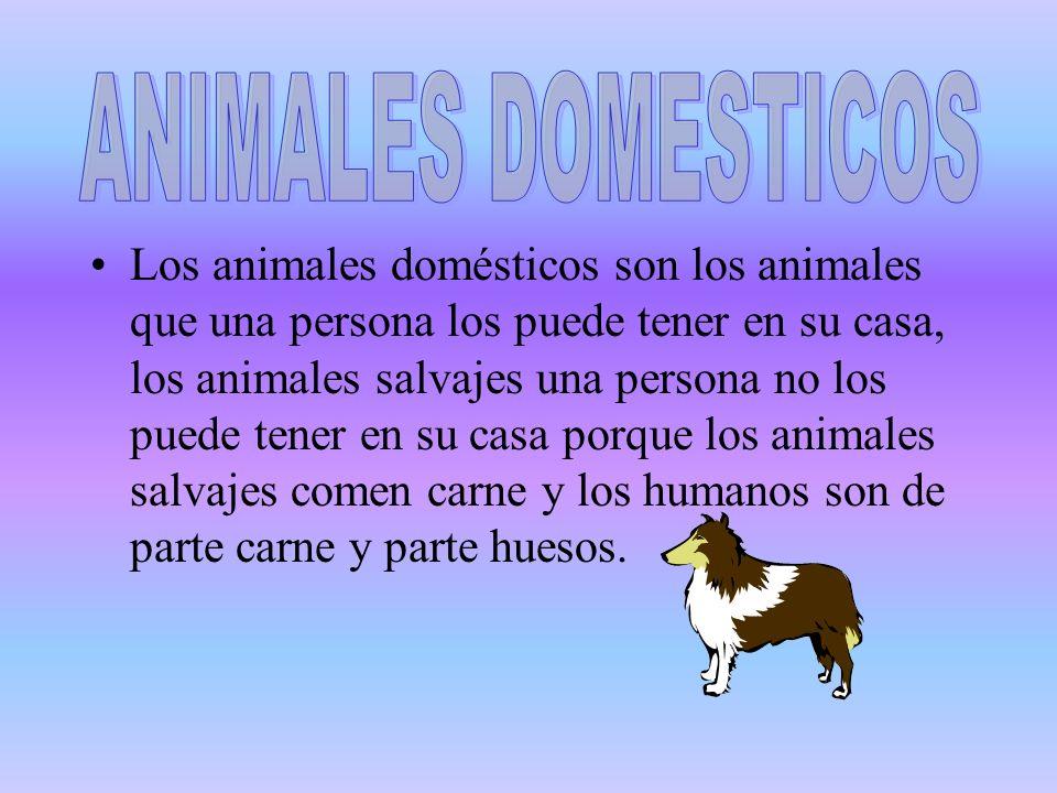 Los animales domésticos son los animales que una persona los puede tener en su casa, los animales salvajes una persona no los puede tener en su casa p
